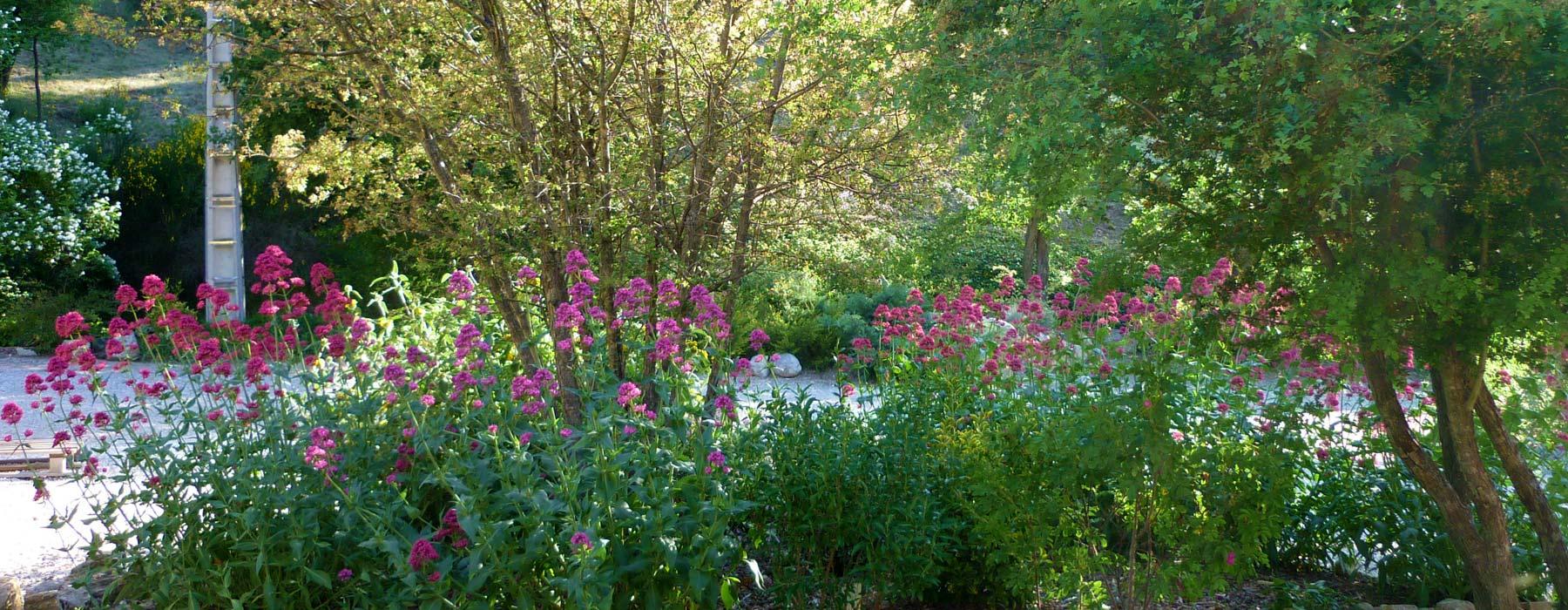 Bernard teste paysagiste en dr me et vaucluse cr ation for Entretien jardin vaucluse